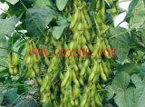 Fertilizzante a base di calce organico del chelato dell'amminoacido