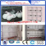Gaiolas do coelho exportadas extensamente para África