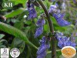 Forskoline normale 20% d'extrait de Forskohlii de coleus