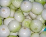 Cipolla bianca pura cinese di nuova qualità di Crhigh (5.0cm ed aumentano)