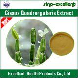 5: 1, polvere naturale dell'estratto di Cissus Quadrangularis di 10:1