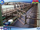 Headlock /Panel скотин поголовья для загородки поголовья фермы (FLM-F-010)