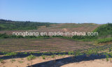 庭の供給PP雑草防除のマット