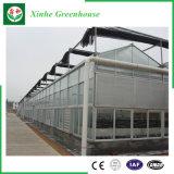 Landbouw/de Commerciële Serre van de Tuin van het Glas voor Bloemen