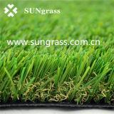 庭または学校(SUNQ-AL00058)のための総合的な景色の草