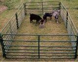 가축은 입힌 분말, 가축 야드 호주를 깐다