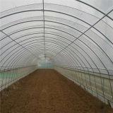 Tunnel 온실 또는 Hoop 온실