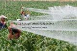 100%년 HDPE 농업 반대로 새 그물