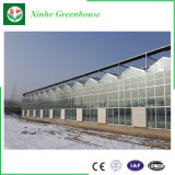 Estufa inteligente do policarbonato para a planta da agricultura