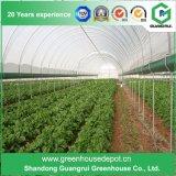 野菜植わるプラスチックマルチスパンのトンネルの温室