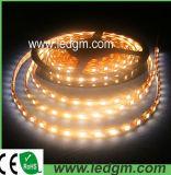 Ce/RoHS impermeabilizzano il commercio all'ingrosso a pile flessibile dell'indicatore luminoso di striscia della striscia 12V SMD 5050 LED dell'indicatore luminoso di RGB IP67 LED