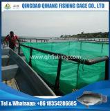 イズミダイの育成のための集中的な栽培漁業のケージ