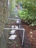 Rede das aves domésticas do PVC/engranzamento da galinha/engranzamento de fio sextavado