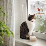 Alimentador de acrílico claro creativo del pájaro de la ventana con las tazas para cualquier estación fuertes de la succión
