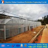 Парник полиэтиленовой пленки земледелия Hydroponics низкой стоимости