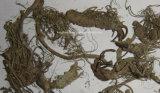 Extracto de Butterbur / Extracto de Petasites Hybridus / Petasins 8%, 15% Nº CAS: 60102-37-6
