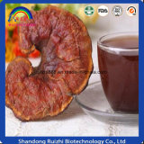 Marca de fábrica directa del OEM del té de Sellingganoderma Lucidum de la fábrica