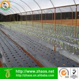 Direct Fabrikant Plastic Film voor Greenhouse