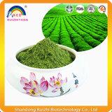 Pó do chá verde de Matcha do extrato da planta