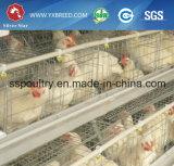 Algerien-Bauernhof-Maschinerie-Huhn-Bauernhof-Batterie für Legehennen mit Auflage-Kühlvorrichtung (A3L120)