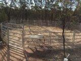 Pre гальванизированный скотный двор панели скотин ярда овец ярда лошади