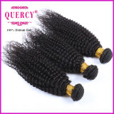 Quercy Hair 8A Grade New Arrival Afro Kinky CurlブラジルのHuman Hair