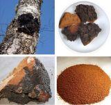 Chagaのきのこのエキスの多糖類10%-30%のInonotusのObliquusエキス