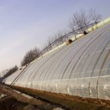 Парник солнечного света горячей низкой стоимости сбывания Vegetable для земледелия