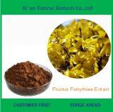 Fructusベストセラーの自然なForsythiaeのエキス