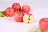 2015 neue Frucht frischer FUJI Apple