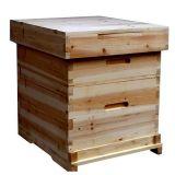 Bester Preis-Bienenstock mit schneller Anlieferung