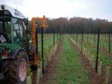 Estacas y postes de la uva para el viñedo