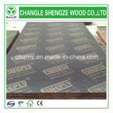 WBP Glue 18mm mit Printed Logo Film Faced Plywood