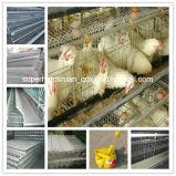 Strumentazione automatica dell'azienda avicola del sistema della gabbia del pollo