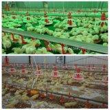 Automatischer Brathühnchen-Bauernhof mit Geräten-u. Fertighaus-Halle-Aufbau