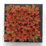 Piante e fiori artificiali della pianta succulente Gu-SD-15113