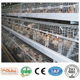 La poulette neuve met en cage le système de matériel à vendre (un type le bâti)