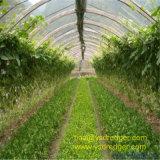 야채를 위한 중국 필름 온실