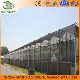 Multispanの最も安く熱い販売および容易にインストール済みガラス温室または大きいガラス農業の温室