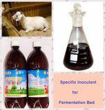 Fermentation Bed (Liquid)를 위한 특정 해초 생물학 Inoculant