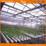 Type élevé Chambre verte de Venlo de feuille de polycarbonate de rendement