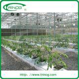 판매를 위한 상업용 높은 현대 기질 수경법 시스템