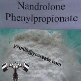 Spezieller Karosserien-Gebäude-PuderNandrolone Phenylpropionate (npp) /62-90-8