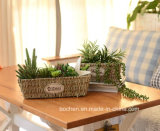 (BC-SF1007) Cestino naturale Handmade ecologico del fiore della paglia