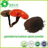 Polvere 98% della spora di Ganoderma rotta coperture naturali Lucidum