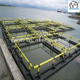 Jaula neta del mar profundo de la piscicultura del HDPE