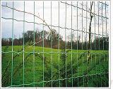 El PVC cubrió la cerca soldada Eurofence del acoplamiento de alambre