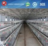 Vollautomatischer Batterie-Huhn-Bratrost-Rahmen
