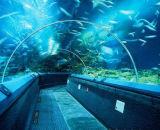 Kleur van de douane dreef AcrylBlad 20mm Aquarium Gegoten Duidelijk AcrylBlad PMMA uit