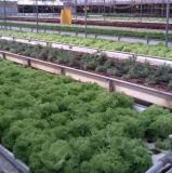 Serres chaudes de pointe et systèmes hydroponiques pour culture de légumes